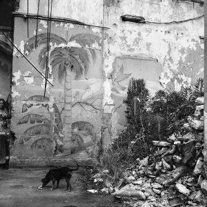 Cuban dogs, 2007